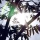 Silhouette Of Leaves On A Tree - VideoHive Item for Sale