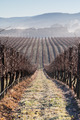 Fog In The Vines in the Yarra Valley - PhotoDune Item for Sale