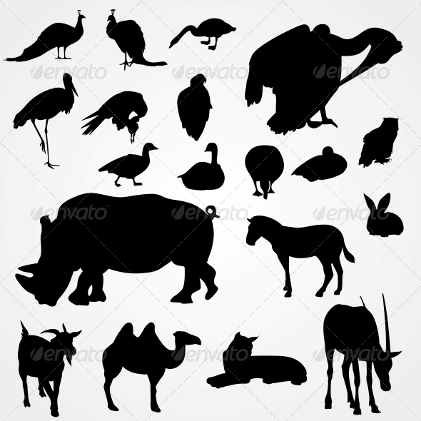 Set of Silhouettes of Animals on Zoo - Animals Characters