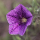 Flower in The Wind (Macro and Swirly Bokeh) - VideoHive Item for Sale