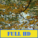 Autumn Leaves Lake - VideoHive Item for Sale