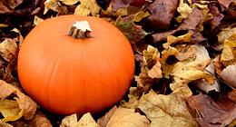 Autumn, Thanksgiving & Halloween