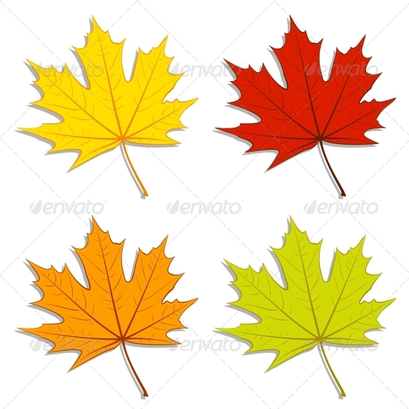 Maple Leaves - Seasons Nature
