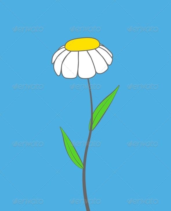 Chamomile - Flowers & Plants Nature