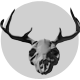 3D Deer Skull Rendering - GraphicRiver Item for Sale