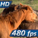 Horse Tenderness  - VideoHive Item for Sale