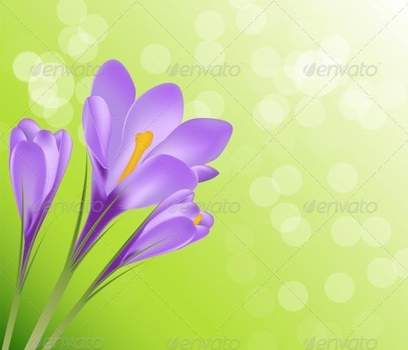 Vector Illustration Crocus Flower Background - Flowers & Plants Nature