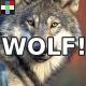 Angry Wolf Growl
