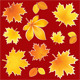 Collection Autumn Leaves - GraphicRiver Item for Sale