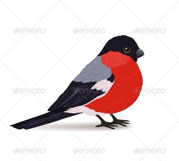 Winter Bullfinch Bird - Animals Characters