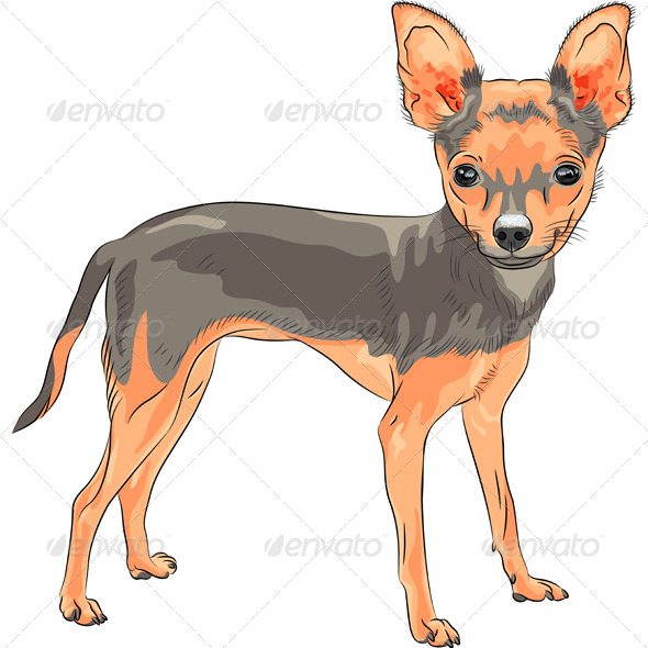 Dog Chihuahua Breed Smiling - Animals Characters