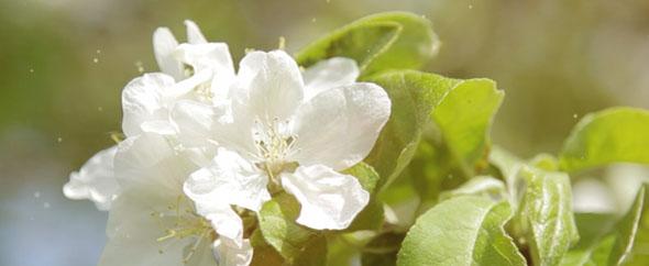 Profile banner blossoms 2