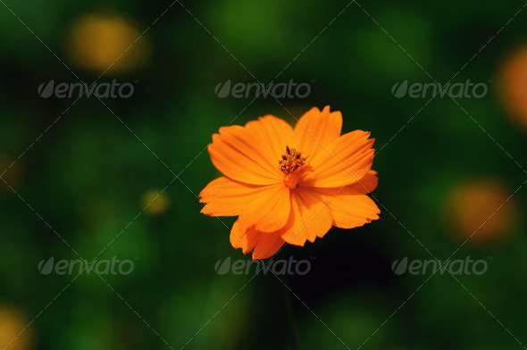 Cosmos - Stock Photo - Images
