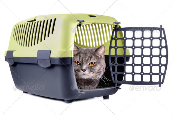 Cat in box - Stock Photo - Images