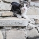 Kitten On The Staircase - VideoHive Item for Sale
