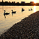 Riverside Sunset - VideoHive Item for Sale