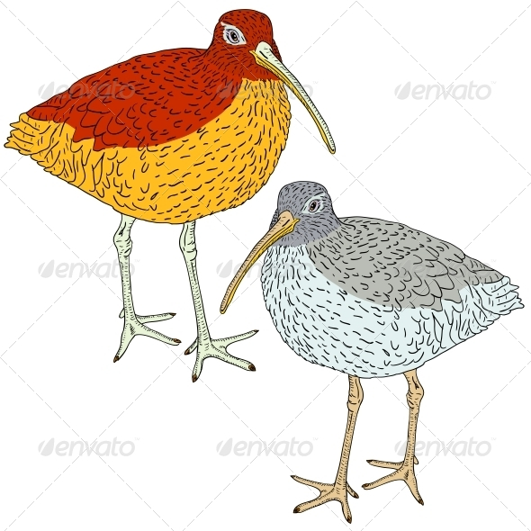 Eurasian Curlew, Bird. Vector Illustration. - Animals Characters