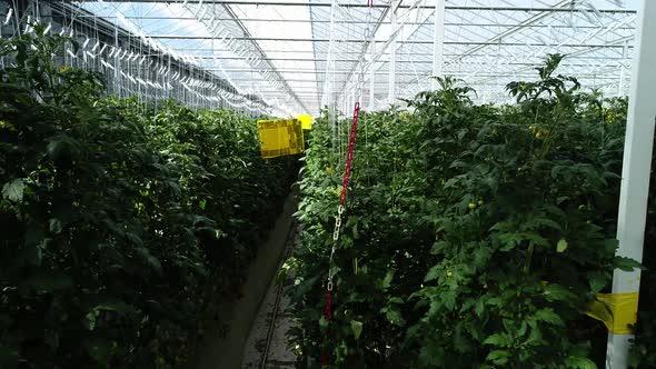 VideoHive Greenhouse 20320317