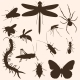 Set of Insects Silhouettes - GraphicRiver Item for Sale