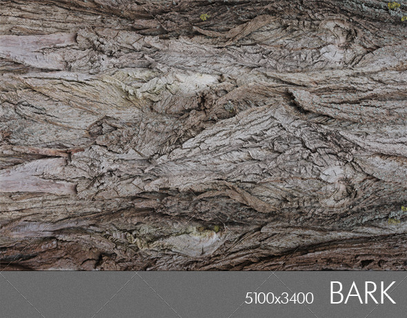 Bark 1 - Wood Textures
