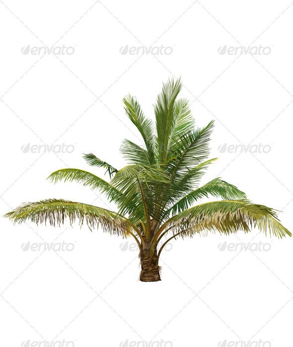 Palm Tree - Flowers & Plants Nature