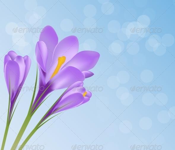 Vector Illustration Crocus Flower Background - Decorative Symbols Decorative