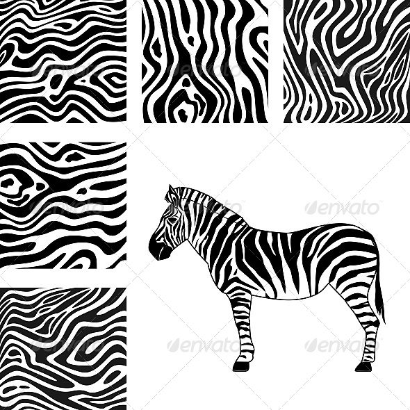 Zebra and Texture of Zebra - Animals Characters