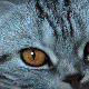 Cat's Eyes - VideoHive Item for Sale