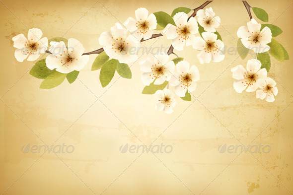 Vintage Background with Blossoming Tree Brunch - Flowers & Plants Nature