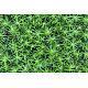 Forest moss texture