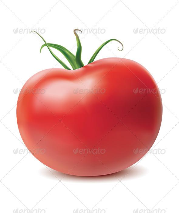 Tomato Isolated on White Background - Objects Illustrations