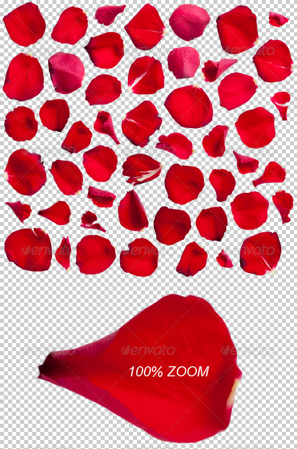 50 Red Rose Petals Photo-realistic - Nature & Animals Isolated Objects