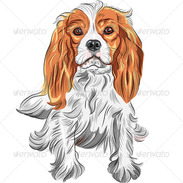 Cavalier King Charles Spaniel Breed  - Animals Characters