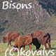 Bisons In The Field 3 - VideoHive Item for Sale