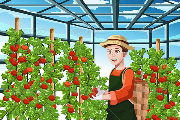Farmer Harvesting Tomatoes - People Characters