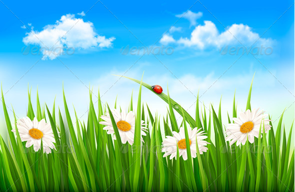 Nature Background with Green Grass, Flowers - Flowers & Plants Nature