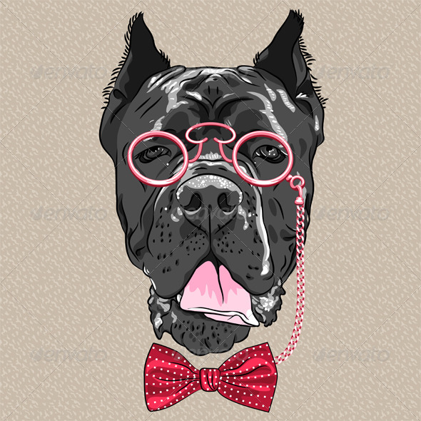 Hipster dog Cane Corso breed - Animals Characters