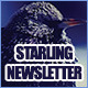 Starling 4-Page Business Newsletter - GraphicRiver Item for Sale