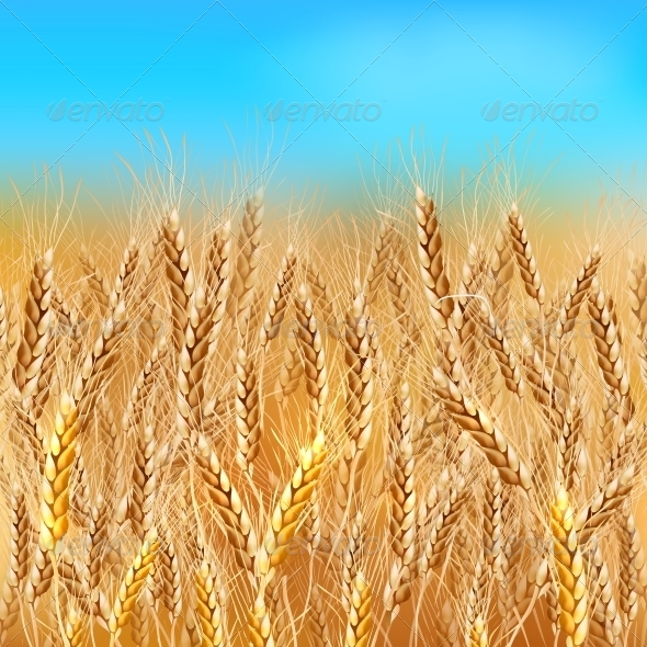 Realistic Wheat Field - Landscapes Nature
