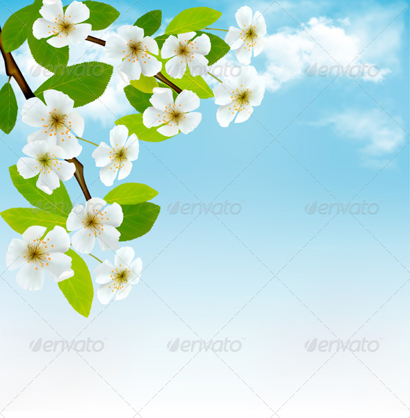 Background with Blossoming Tree - Flowers & Plants Nature