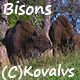 Bisons  - VideoHive Item for Sale