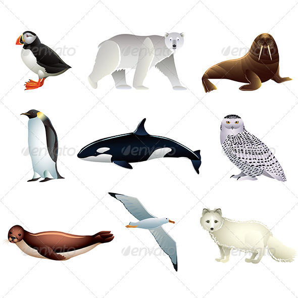 Arctic Animals Set - Animals Characters