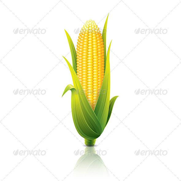 Corncob - Food Objects