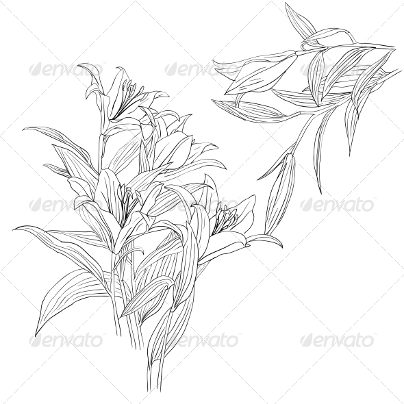 Floral Design Element - Web Elements Vectors