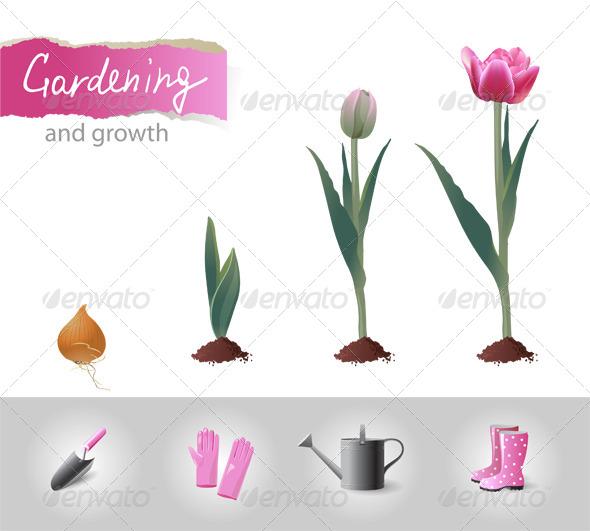 Growing Tulip - Flowers & Plants Nature