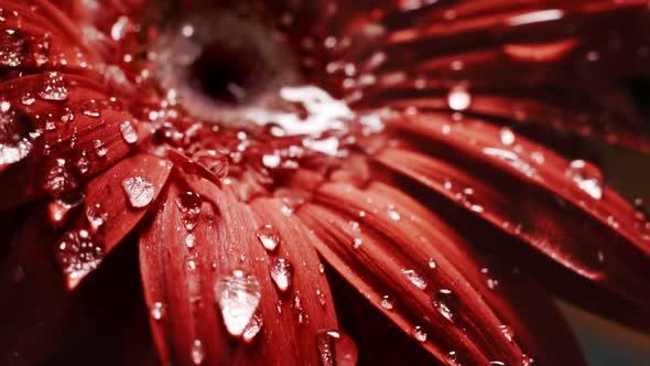 Flower Rain
