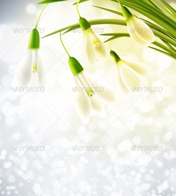 Background with Snowdrops - Flowers & Plants Nature