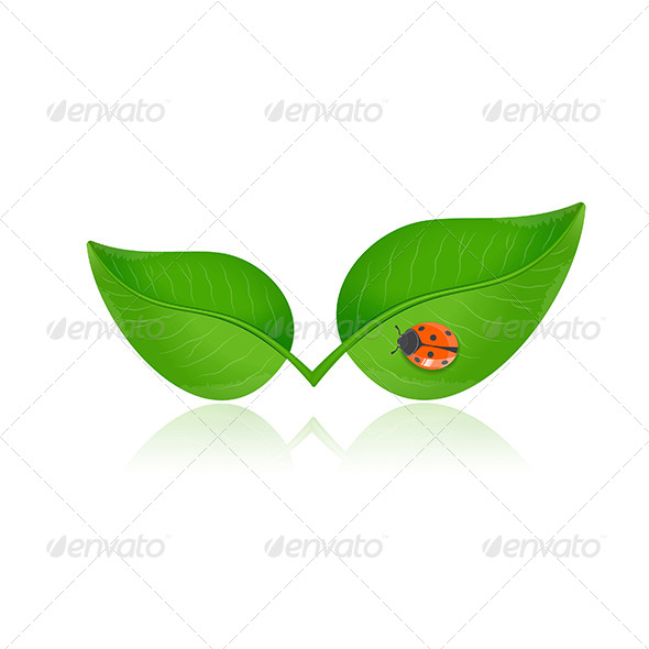 Green Leaf with Ladybird - Flowers & Plants Nature