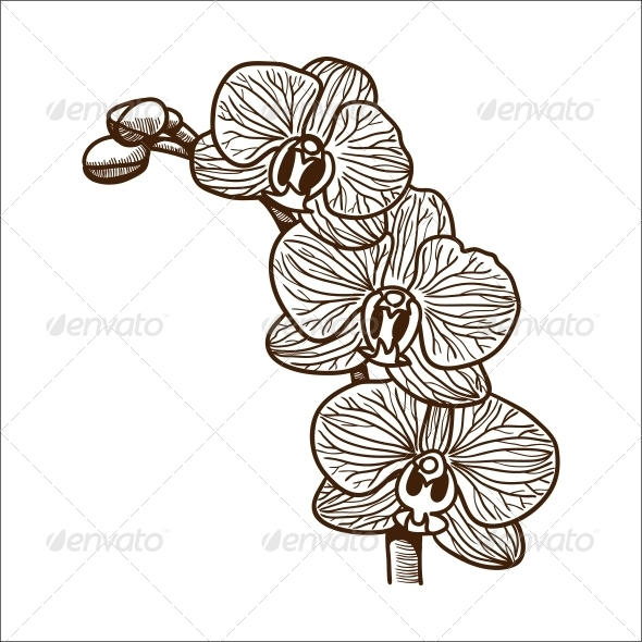 Orchid Flower - Flowers & Plants Nature