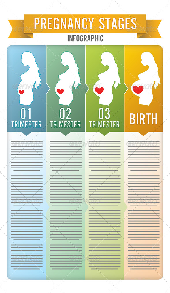 Pregnancy Stages - Vectors